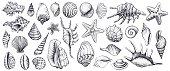 istock Seashells vector set. Hand drawn illustrations. 670377514
