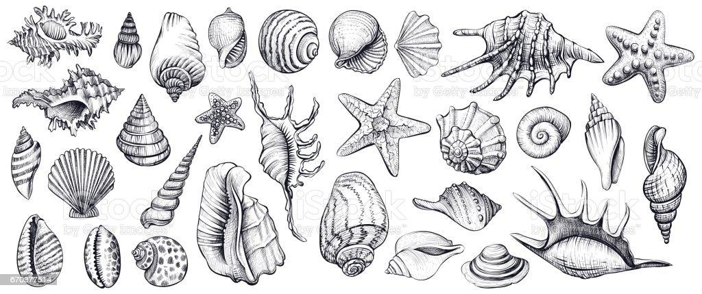 Seashells vector set. Hand drawn illustrations. vector art illustration