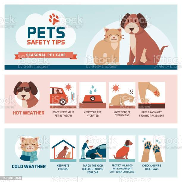 Seasonal pet safety tips vector id1024810408?b=1&k=6&m=1024810408&s=612x612&h=56r850ccksxyutikakiaghamtq4qbxtn0axhtmwfl 4=