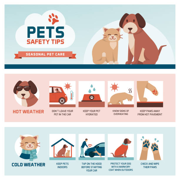 seasonal pet safety tips - pets stock illustrations, clip art, cartoons, & icons