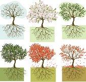 Seasonal trees: winter, spring, summer, autumn