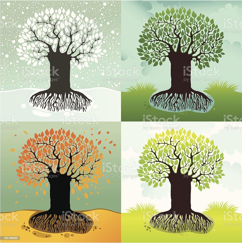 Vector illustration of seasonal tree. Winter, spring, summer, autumn.
