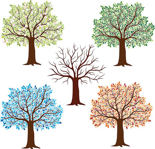 saisonale bäumen - winterruhe stock-grafiken, -clipart, -cartoons und -symbole