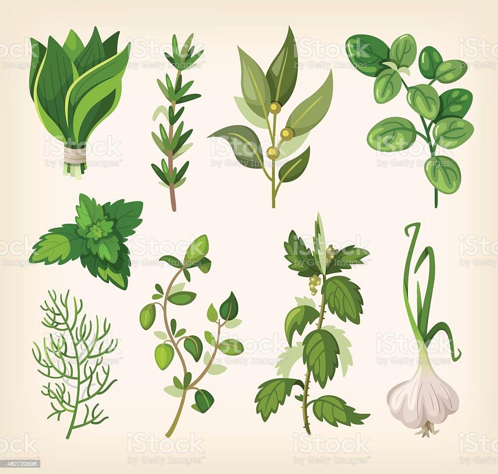 Seasoning and dressing herbs vector art illustration