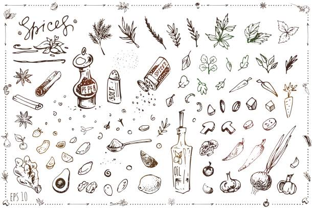 Seasoning and vegetables hand drawn illustrations set. Vector sketches of salt and pepper in shaker, spices and herbs isolated on white background. Vintage cookbook or menu design Seasoning and vegetables hand drawn vector set salt seasoning stock illustrations