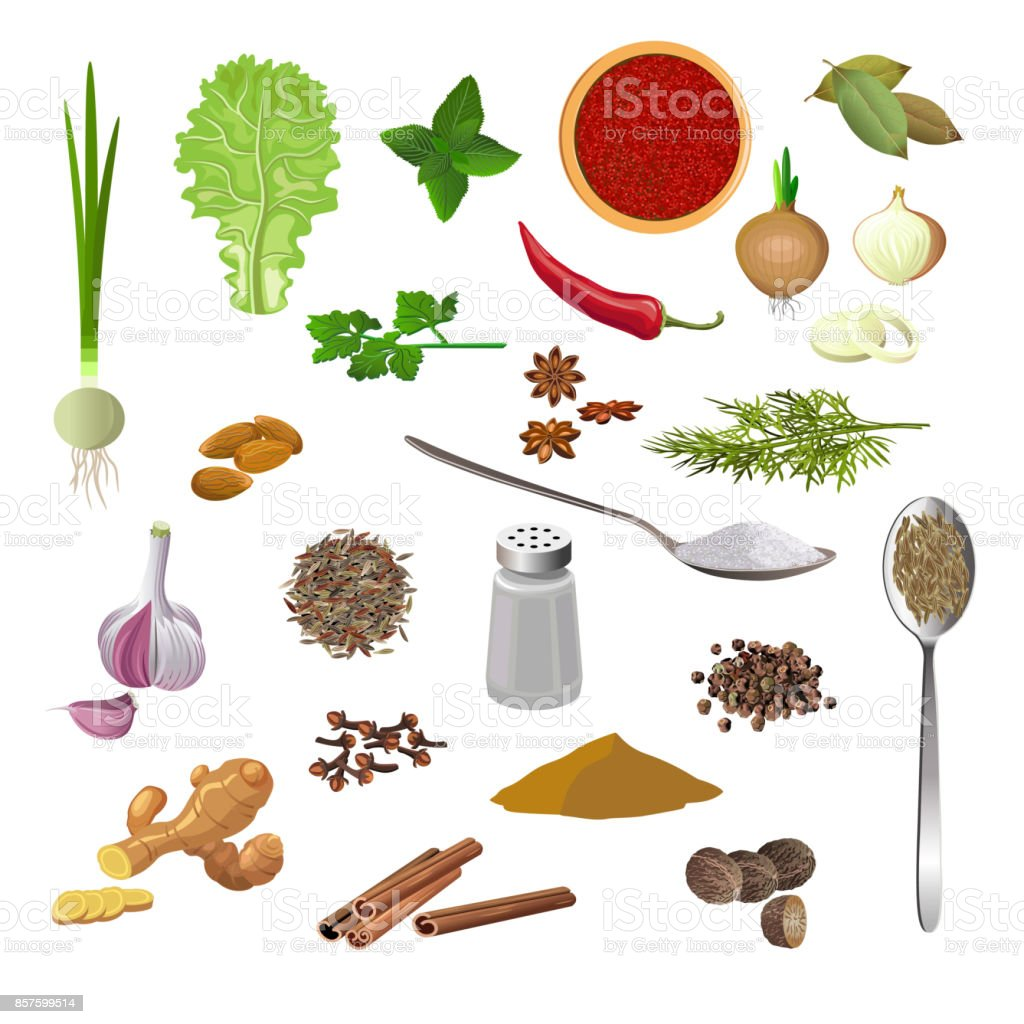 Seasonings, herbs and spices vector art illustration