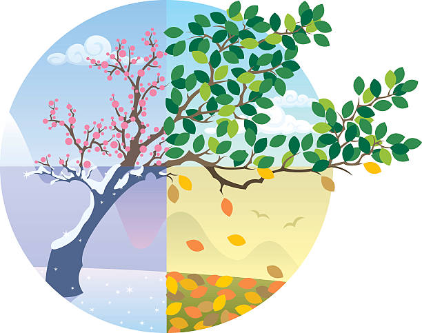 seasons cycle - four seasons stock illustrations