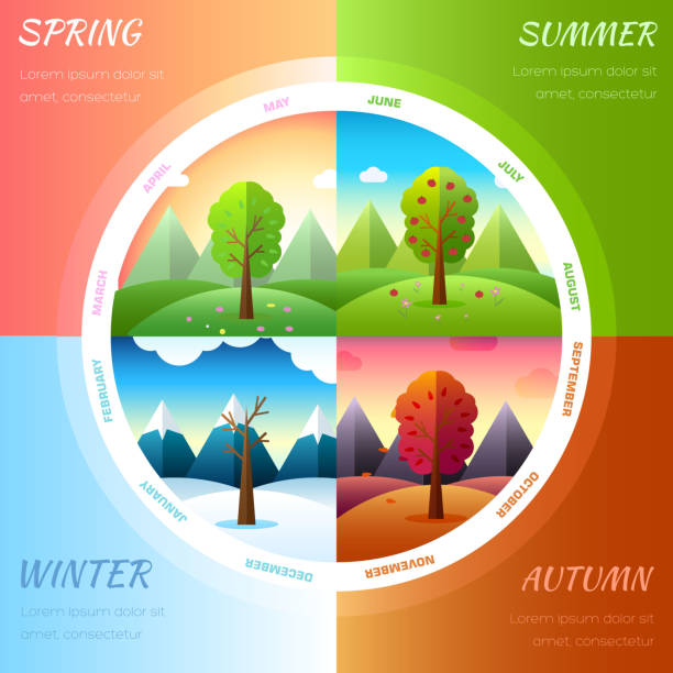 seasons year infographic background - four seasons stock illustrations