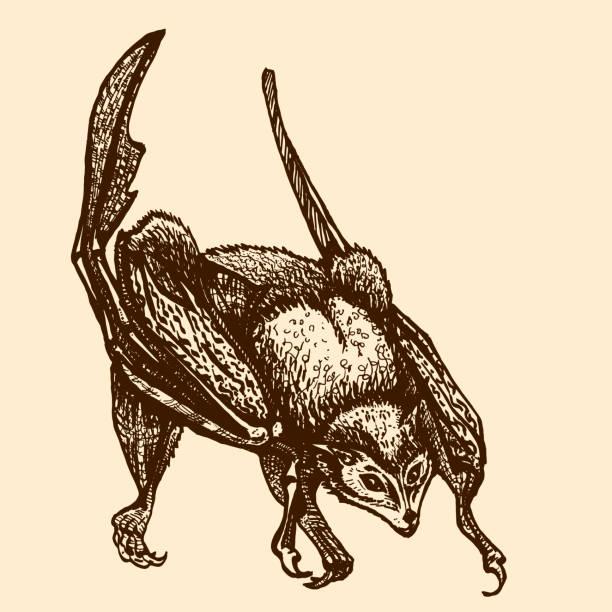 sitzende fledermaus mit gefalteten flügeln. pteropodidae. fliegender fuchs - megabat stock-grafiken, -clipart, -cartoons und -symbole
