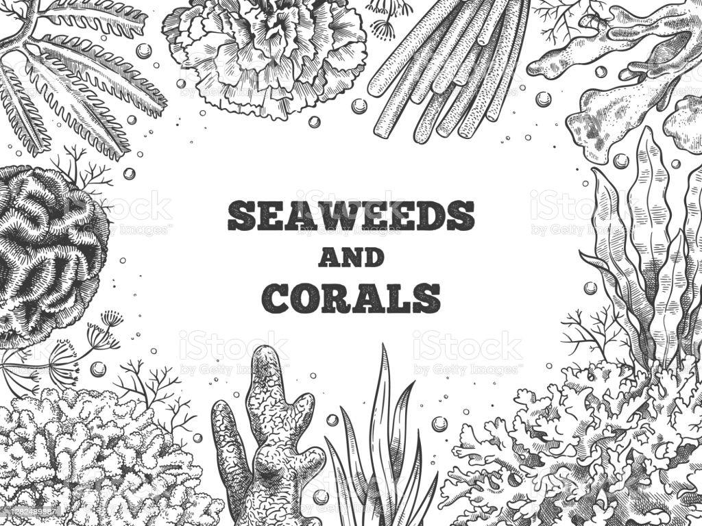 Latar Belakang Rumput Laut Terumbu Air Weed Dan Karang Laut Bawah ...