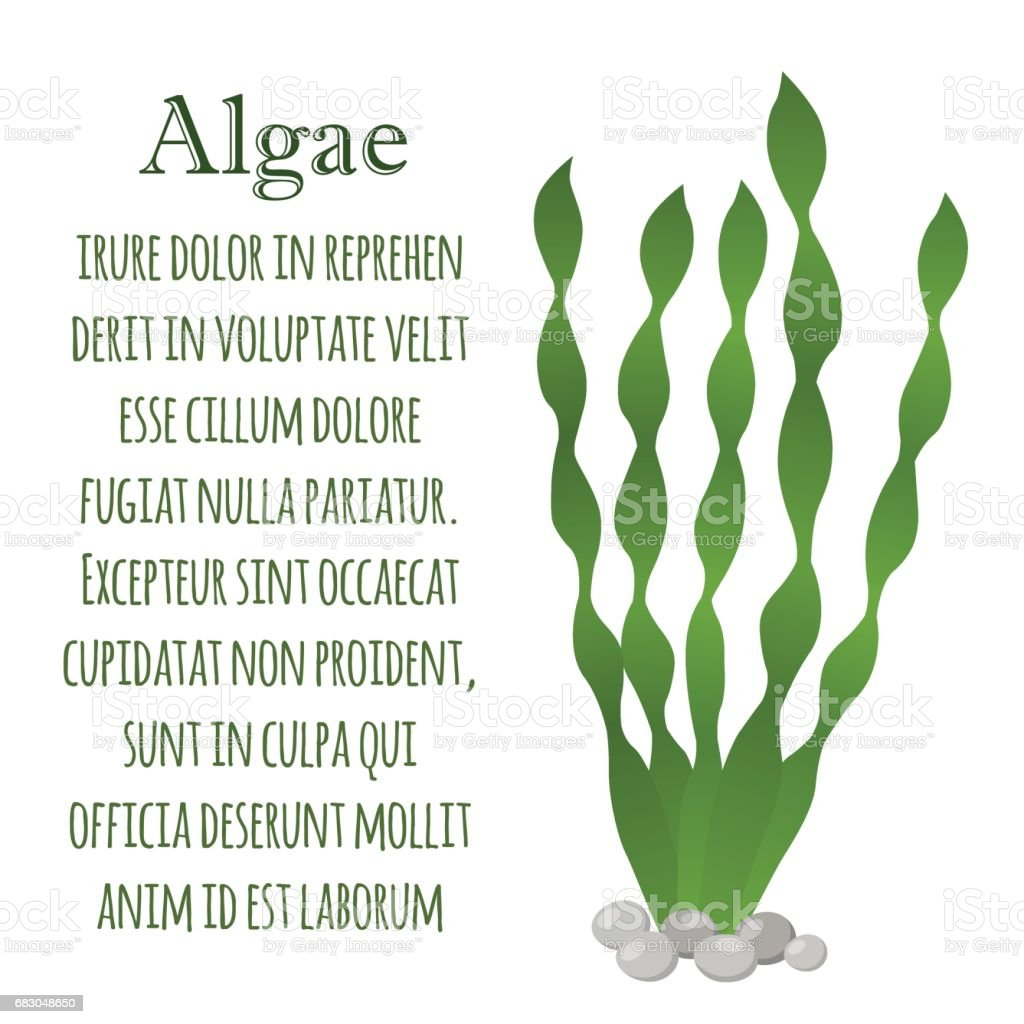 Seaweed Healthy Spirulina Green Algae Made In Cartoon Flat Style ...