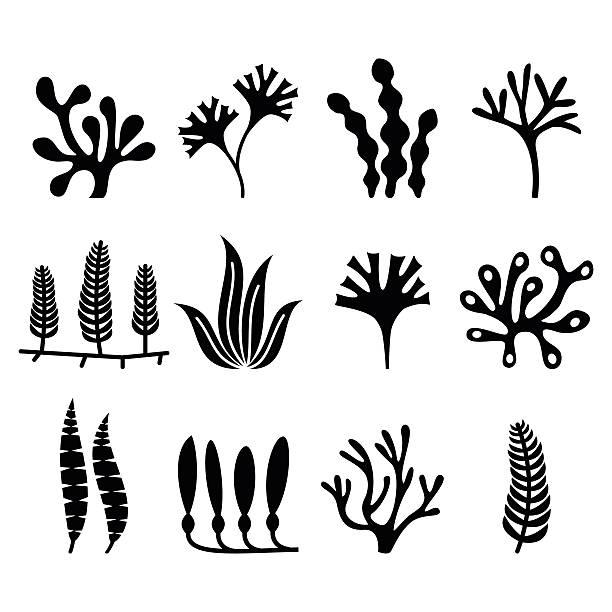 seetang-icons set-natur, lebensmittel-trends konzept - algen stock-grafiken, -clipart, -cartoons und -symbole