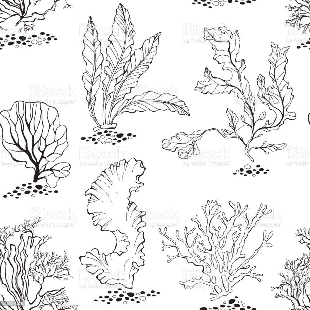 Line Art Underwater : Seaweed seamless vector pattern with underwater plants
