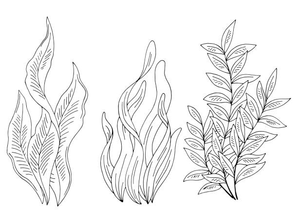 algen set grafik schwarz weiß isoliert skizze illustration vektor - algen stock-grafiken, -clipart, -cartoons und -symbole