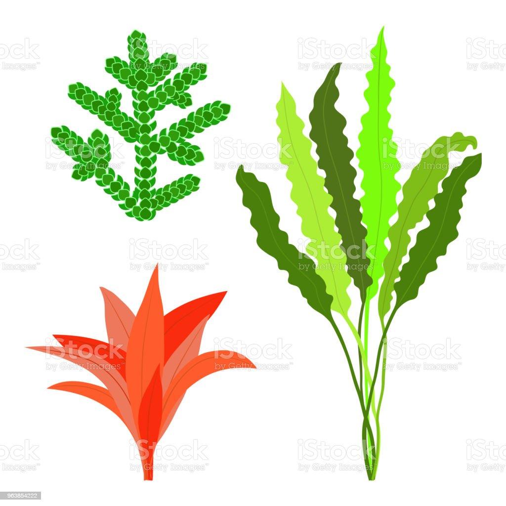 Seaweed set. Isolated on white background. Vector illustration. - Royalty-free Algae stock vector