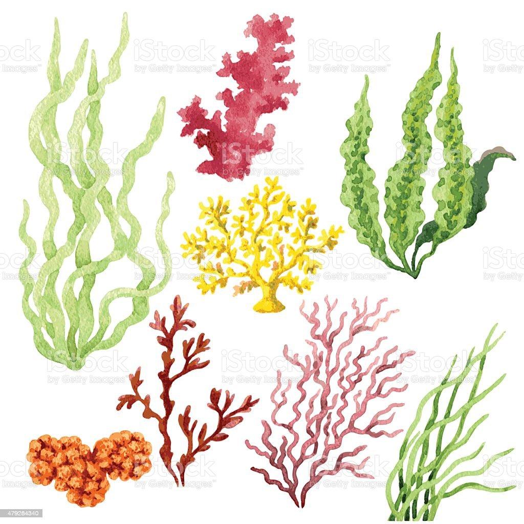 Juego de algas - ilustración de arte vectorial