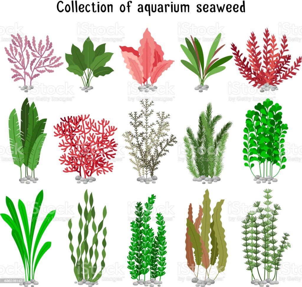 Seaweed set vector illustration - ilustración de arte vectorial