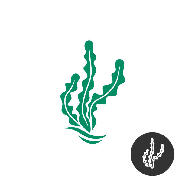 algen-vektor-symbol-vorlage. eine schwarze farbe monochrome version - algen stock-grafiken, -clipart, -cartoons und -symbole