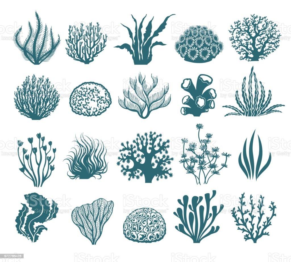 Zeewier en koraal silhouetten - Royalty-free Abstract vectorkunst