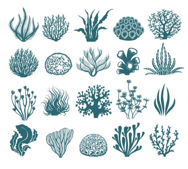 algen und korallen silhouetten - algen stock-grafiken, -clipart, -cartoons und -symbole