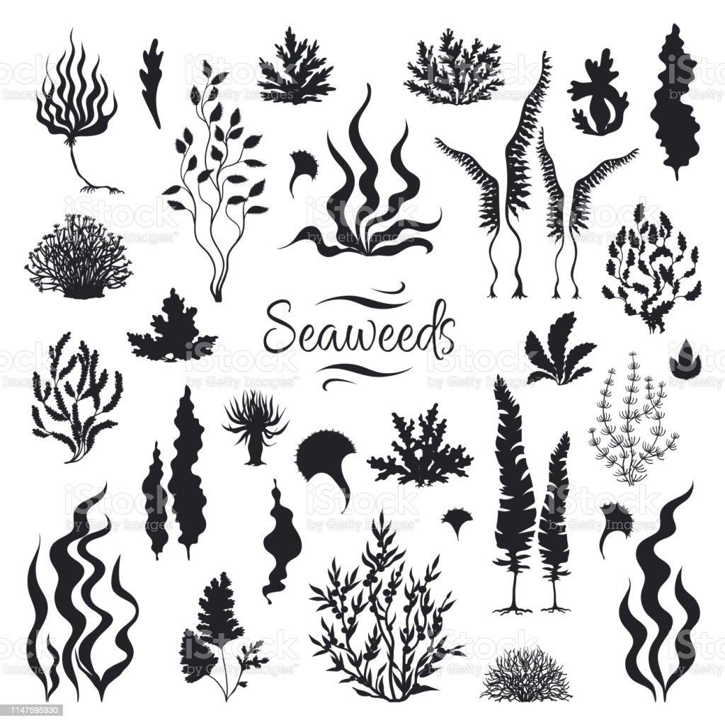 Zeewieren silhouetten. Onderwater koraal rif, met de hand getekend zee zeewier plant, geïsoleerde mariene onkruid. Vector schets aquarium zeewier - Royalty-free Abstract vectorkunst