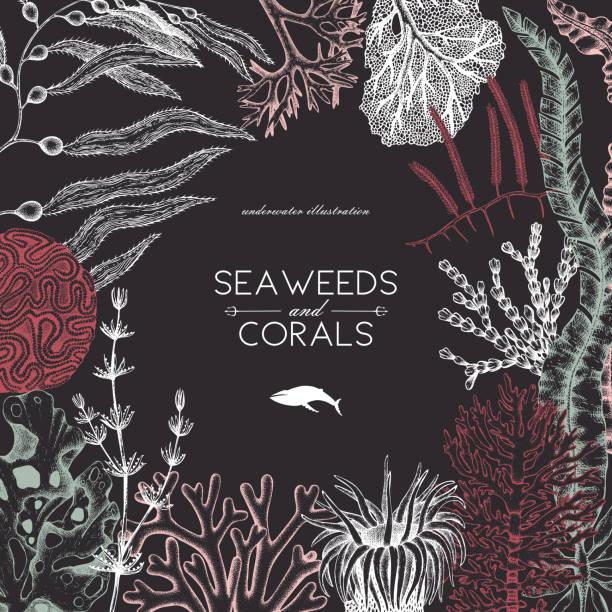 illustrazioni stock, clip art, cartoni animati e icone di tendenza di seaweeeds design template - immerse in the stars
