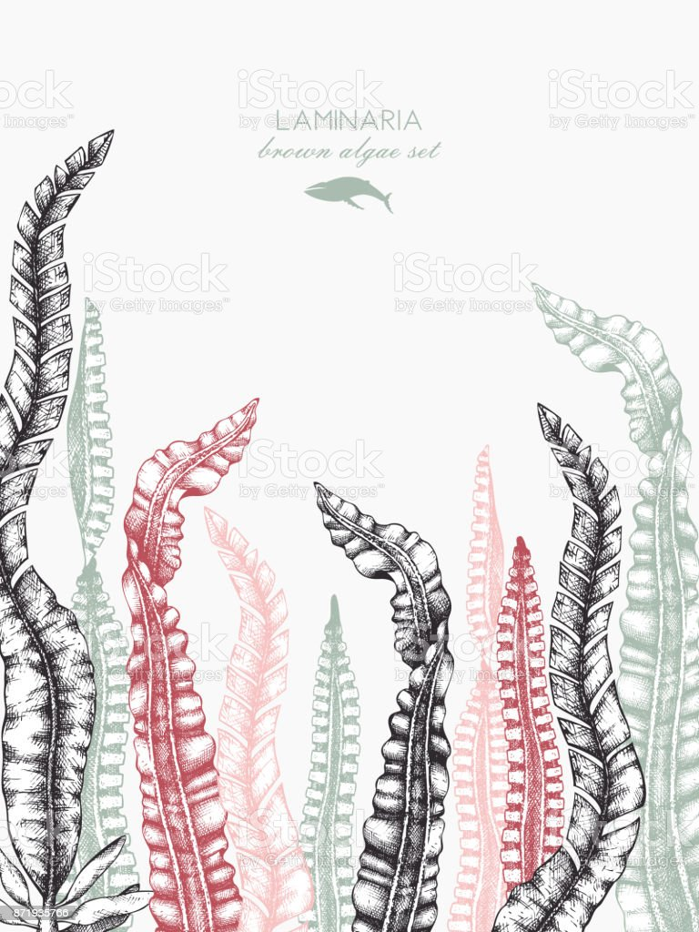 Plantilla de diseño Seaweeeds - ilustración de arte vectorial