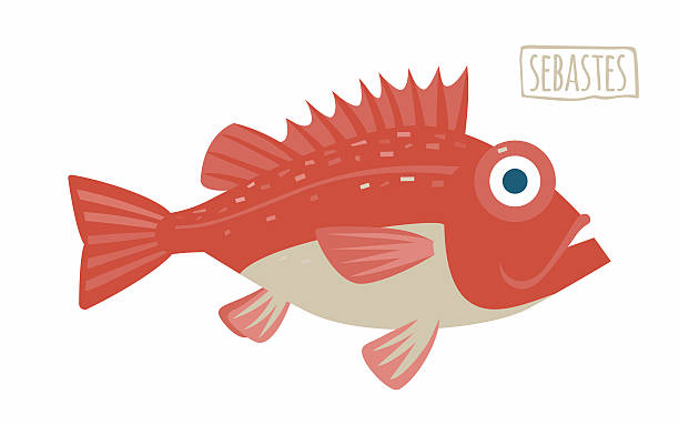 sebastes (rockfish) - redfish stock illustrations, clip art, cartoons, & icons