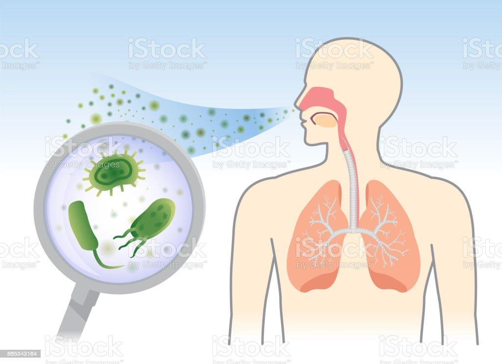Sehen Sie Bakterien Und Pilze In Die Atemwege Des Menschlichen Aus ...