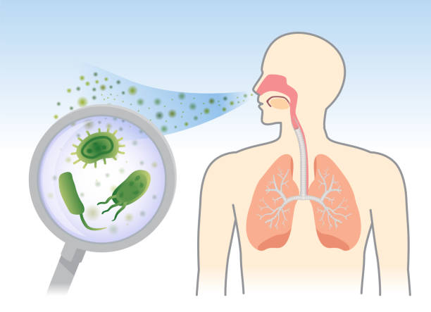 See Bacteria and Fungi into respiratory of human from breathe with Magnifying glass. See Bacteria and Fungi into respiratory of human from breathe with Magnifying glass. Illustration about air pollution. respiratory tract stock illustrations