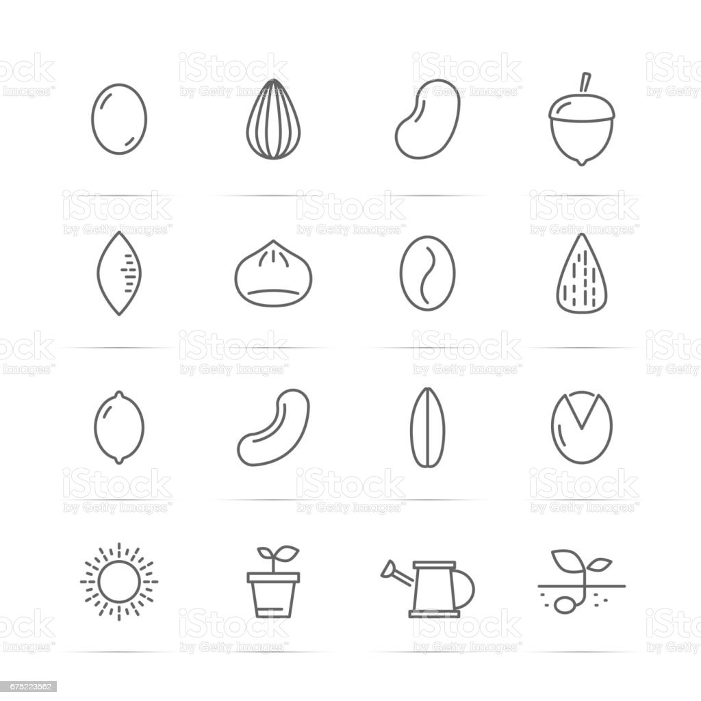 seed and nut vector line icons royalty-free seed and nut vector line icons stock vector art & more images of agriculture