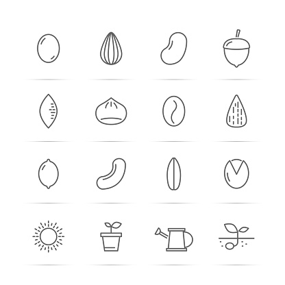 seed and nut vector line icons