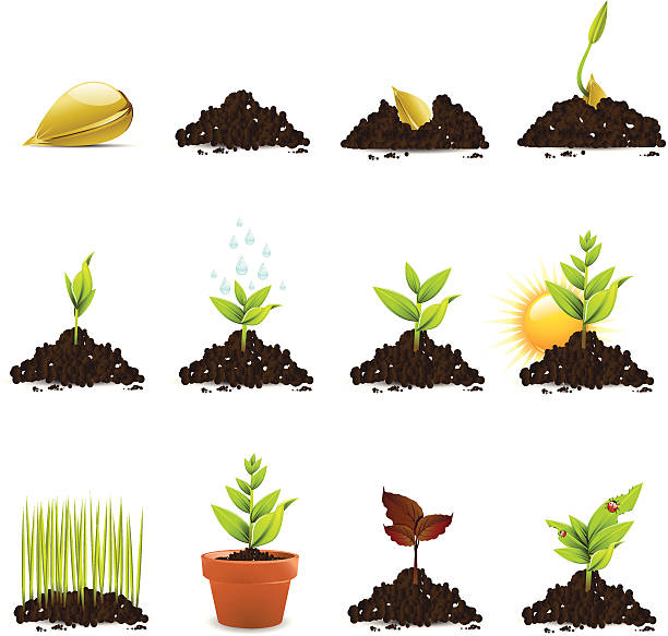 Seed and Plant Growth Icons http://www.cumulocreative.com/istock/File Types.jpg garden center stock illustrations