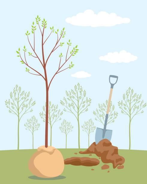 ilustrações de stock, clip art, desenhos animados e ícones de seeding fruit tree - plantar