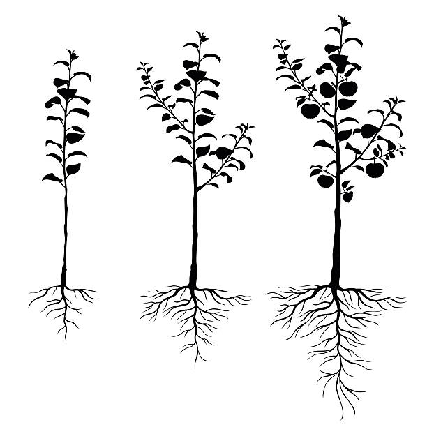 seedling apple trees with roots set vector art illustration