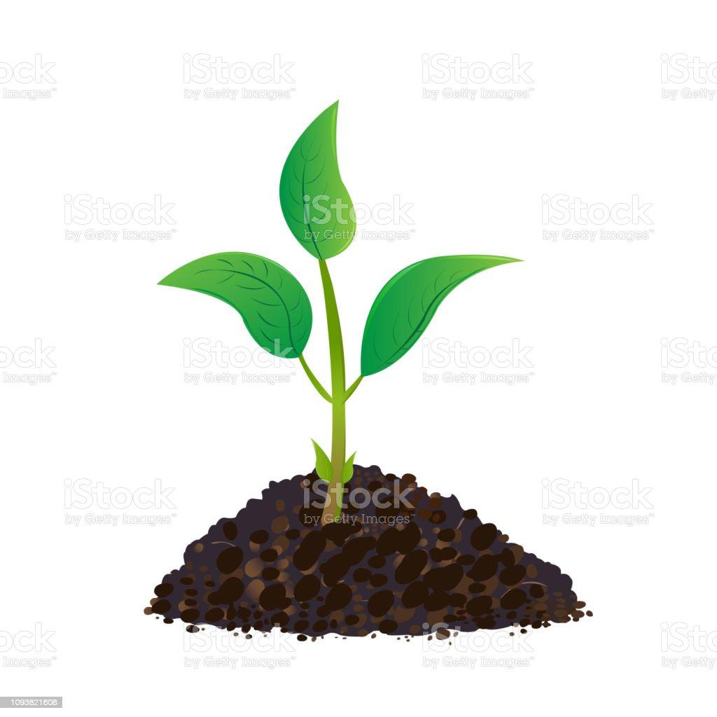 実生ガーデニング植物の種子地上で発芽 アイコンのベクターアート素材