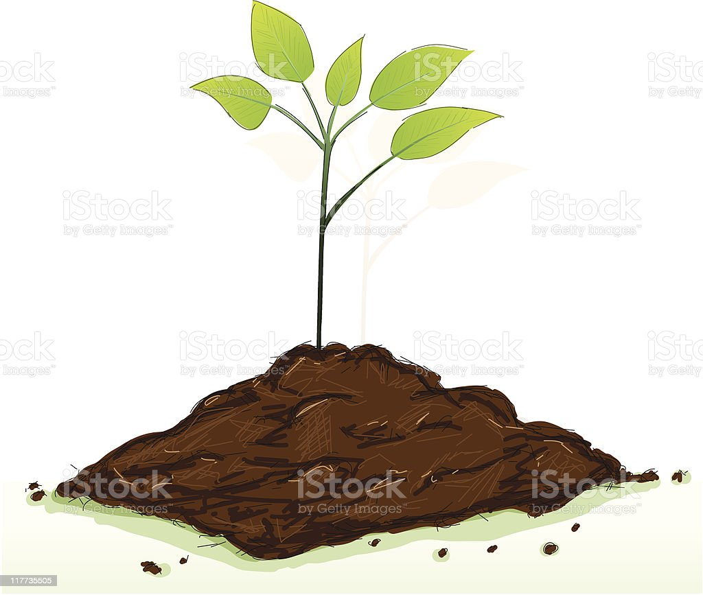 keimling grün royalty-free keimling grün stock vector art & more images of agriculture