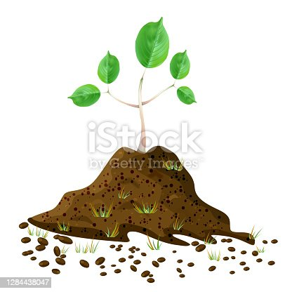 istock Seedling in soil pile isolated on white background. Pile of dirt and growing green sapling. 1284438047