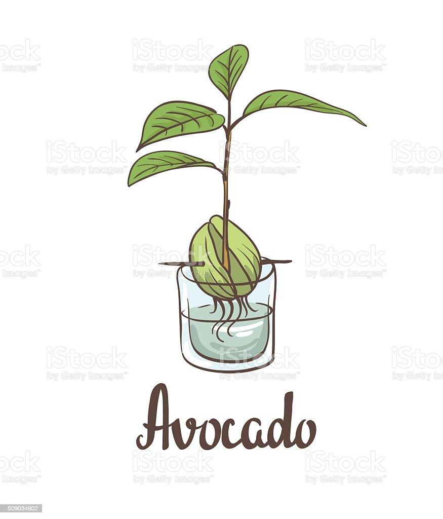 Seedling of avocado on a laboratory flask. vector art illustration