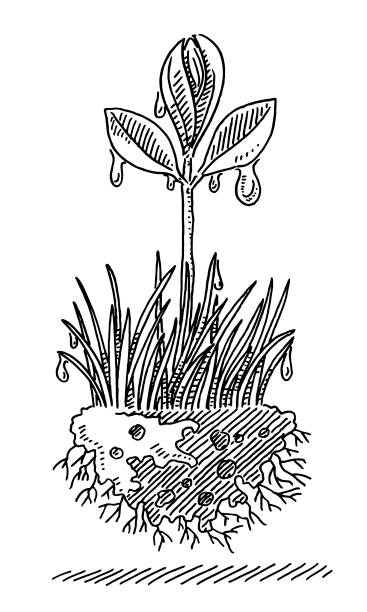 Seedling Plant Grass Soil Root Drawing Hand-drawn vector drawing of a Seedling Plant with Grass, Soil and Roots. Black-and-White sketch on a transparent background (.eps-file). Included files are EPS (v10) and Hi-Res JPG. environment stock illustrations