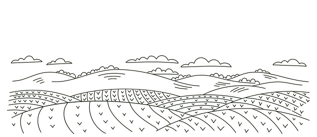 Seedlings fields landscape. Countryside rural landscape. Growing vegetables garden rows. Agriculture. Vector contour sketch line. Young plants.