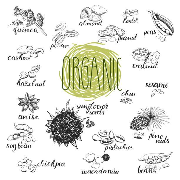 ilustrações de stock, clip art, desenhos animados e ícones de seeds and nuts set. hand drawn sketches of organic plants. - quinoa