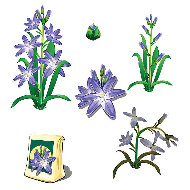 Best Wilted Plant Illustrations, Royalty-Free Vector ...