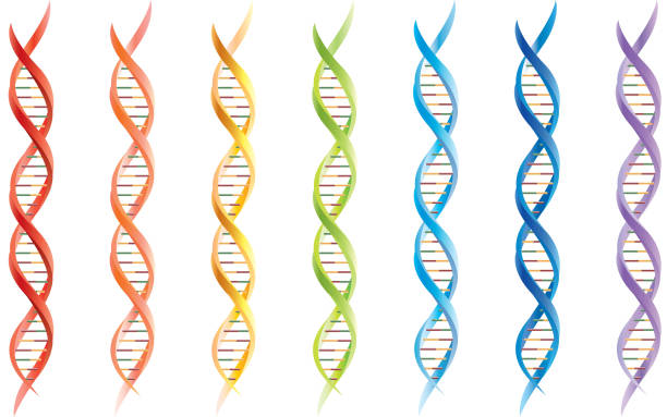 DNA segments Gradient used. helix model stock illustrations