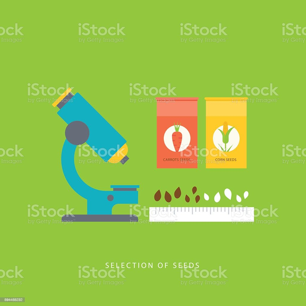 Selections of seeds. Concept in flat style. vector art illustration