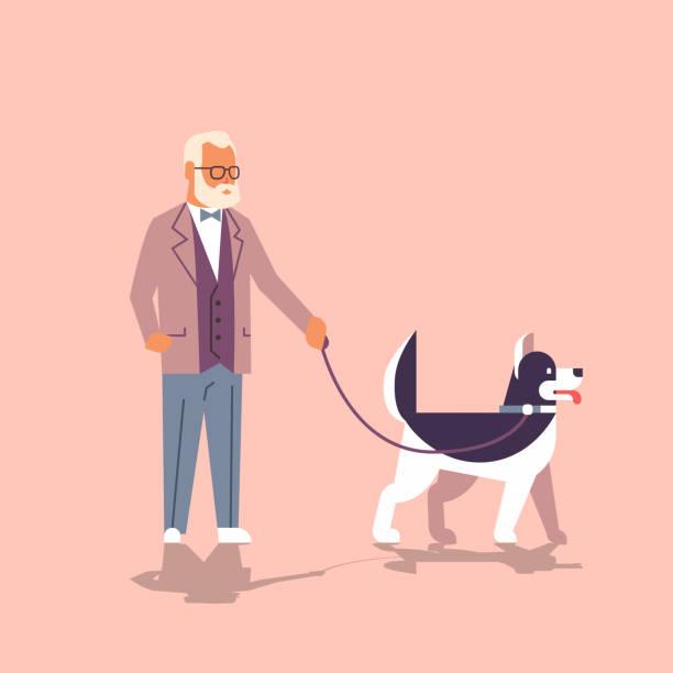 bildbanksillustrationer, clip art samt tecknat material och ikoner med senior mannen gå med husky hunden farfar med hans djur pet bästa vän koncept platta tecknad karaktär full längd - senior walking