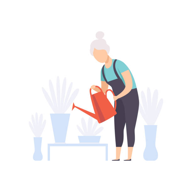 Senior woman character watering flowers with can, elderly people leading an active lifestyle social concept vector Illustration on a white background Senior woman character watering flowers with can, elderly people leading an active lifestyle social concept vector Illustration isolated on a white background. gardening stock illustrations
