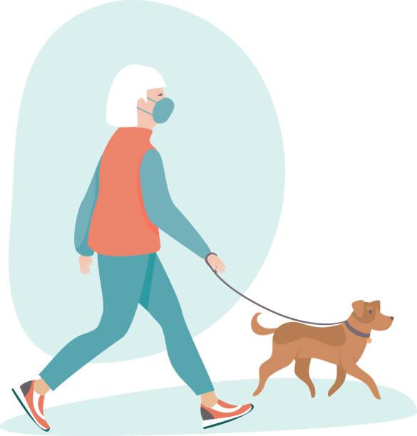 bildbanksillustrationer, clip art samt tecknat material och ikoner med äldre kvinna bär skyddande medicinsk mask gå med sin hund - senior walking