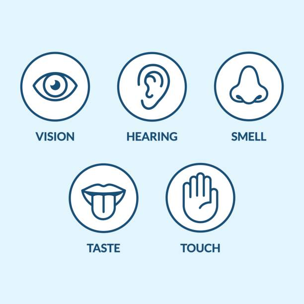 Senses icon set Icon set of the five human senses: vision (eye), smell (nose), hearing (ear), touch (hand), taste (mouth with tongue). Simple, minimal line icons vector illustration. sensory perception stock illustrations