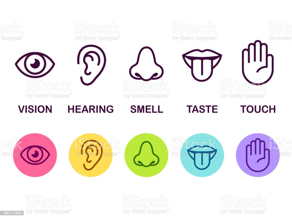 Senses icon set - Векторная графика Анатомия роялти-фри